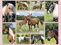 Horse Heaven, XXL 300 screen shot 1