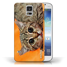 STUFF4 Phone Case/Cover for Samsung Galaxy S5/SV/Big Eye Cat Design/Funny Animals Collection Mobile phones