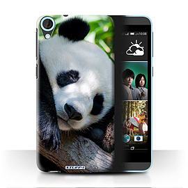 STUFF4 Phone Case/Cover for HTC Desire 820/Panda Bear Design/Wildlife Animals Mobile phones