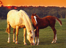 Beautiful Horses 500pc screen shot 1